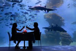 Palma_Aquarium